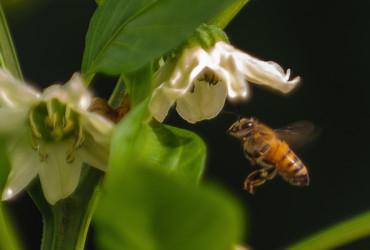 הגנת הצומח